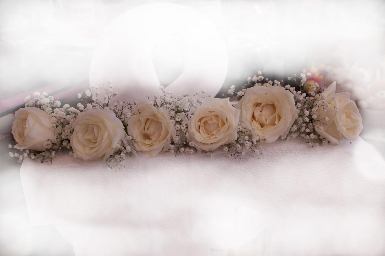 Rosa blanca para las damas